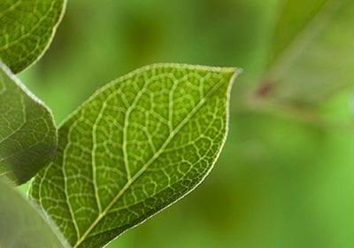 Pantone revela a cor do ano para 2017: Greenery